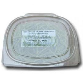 fresh salicornia cadiz spain