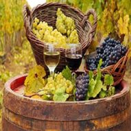 vinoteca gourmet online
