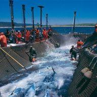 Conservas del mar, algas y salazones
