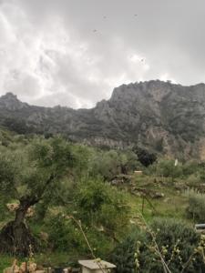 Colmenas con tajo Algarín, sierra de Cádiz